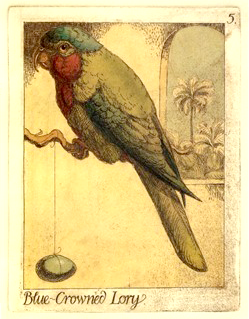 Blue-Crowned Lory from Charles van Sandwyk's Parrots of the Cannibal Islands