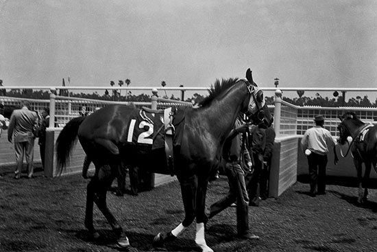 Image of horse with the number 12