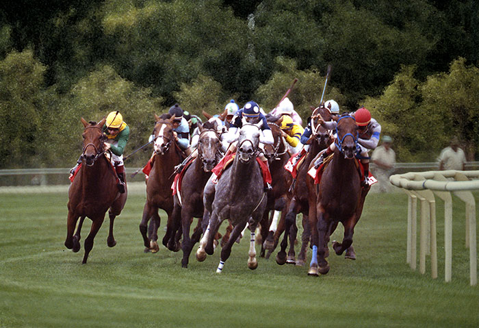 Image of horses running the Hollywood Park track