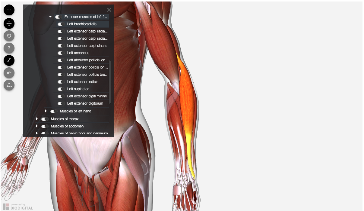 Screenshot of Access Medicine Human Anatomy Model presenting left forearm