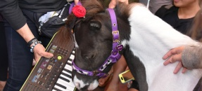 therapy pony over a keyboard