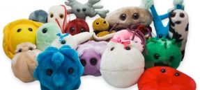 GIANTmicrobes at the Biomedical Library
