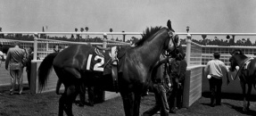 Horse with the number 12